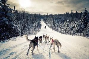 Сказочное путешествие № 58: сафари на снегоходах и собачьих упряжках в Карелии!