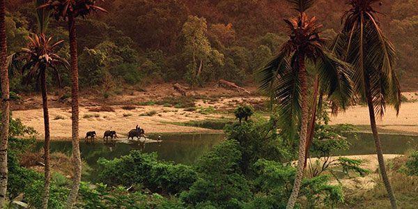 Сказочное путешествие № 127: Шри-Ланка с прямым перелетом!