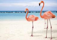 Сказочное путешествие № 200: остров Кайо-Коко, Куба