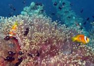 Акаба, Иордания, Красное море - путешествия, отдых, экскурсии, дайвинг.