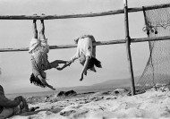 CHILE. Village of Los Horcones. Fishermen daughters. 1956.